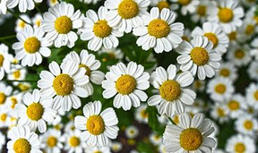 פרחים וצמחי מרפא