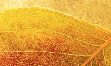 תמונת אווירה לטיפול בצמחי מרפא